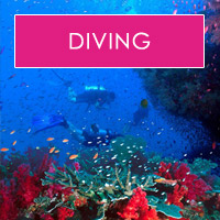 fiji dive holiday