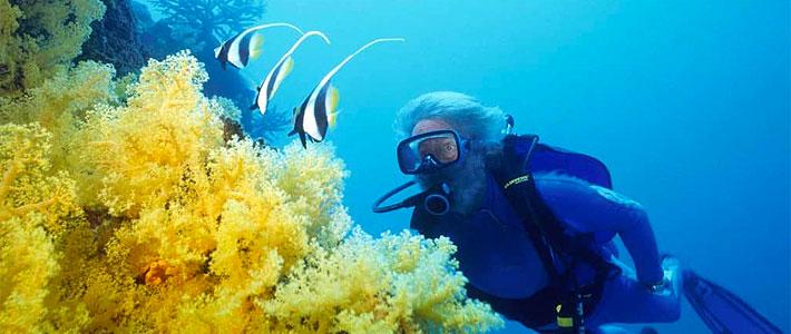 jean michel cousteau resort fiji diving