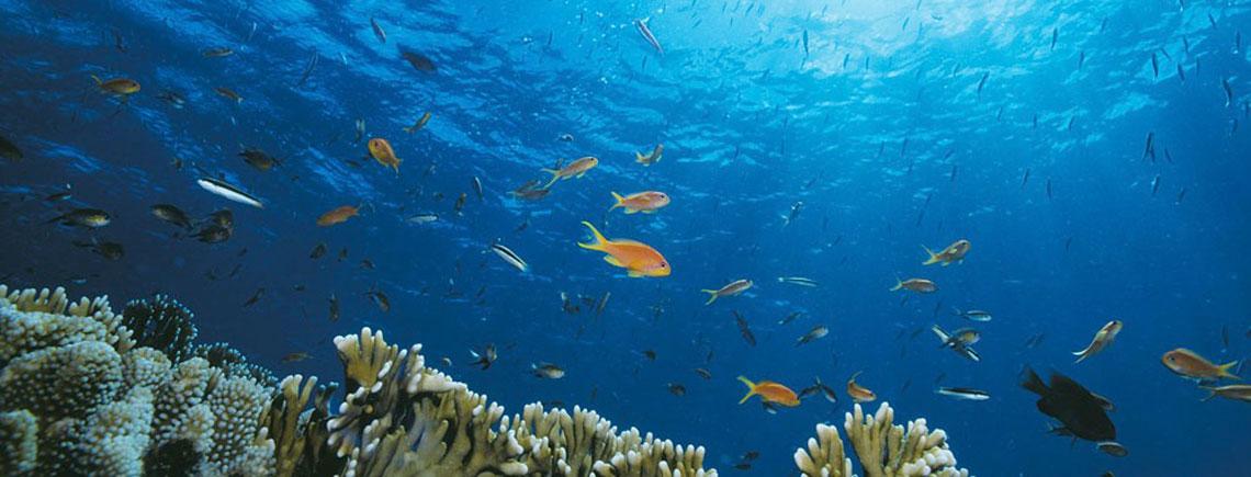royal davui resort diving snorkelling