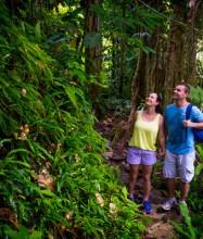Spectacular rainforests