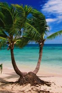 plantation-island-resort-fiji7