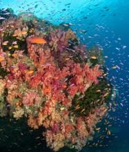 Paradise Taveuni Resort – Diving