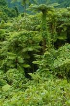 Paradise Taveuni Resort – Rainforest Walk