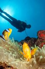 Paradise Taveuni Resort – Scuba Diving