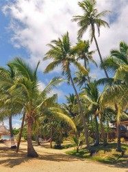 Paradise Cove Resort Fiji – One Bedroom Beachfront Villa