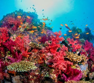 diving holidays fiji