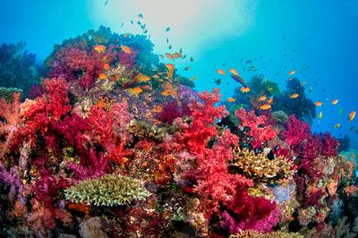 diving holidays fiji