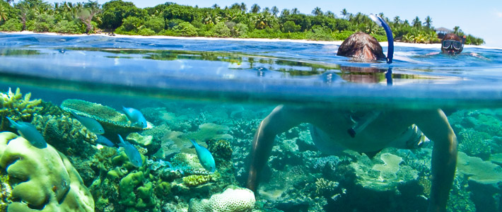 diving vomo island fiji