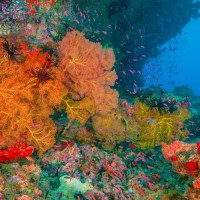 Fiji Diving – Beqa Lagoon & Pacific Harbour