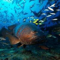 Fiji Diving – Beqa Lagoon & Pacific Harbour