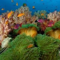 diving-fiji