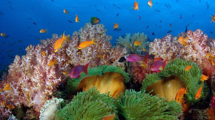 diving beqa lagoon fiji