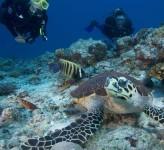 Six Senses Resort – Diving