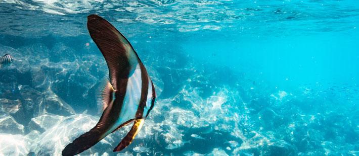 six senses fiji diving
