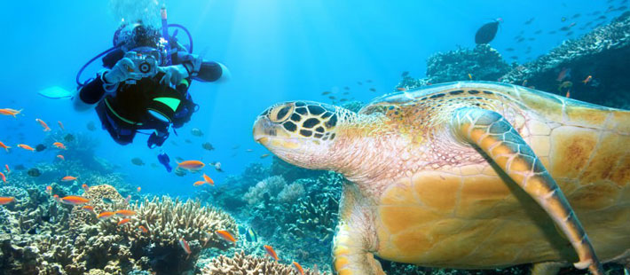 six senses resort fiji diving