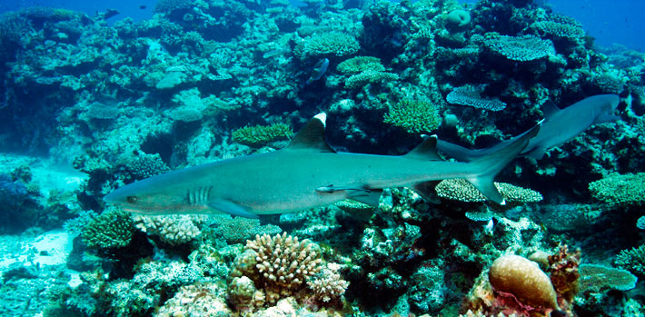 things to do in fiji diving