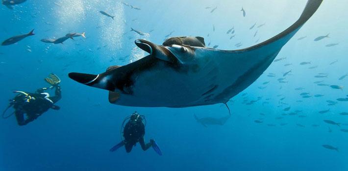 kokomo private island fiji diving