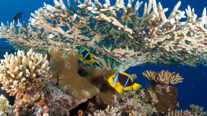 travel review qamea resort diving