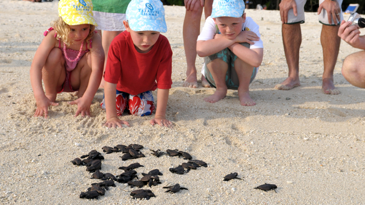 treasure island resort fiji turtle release program