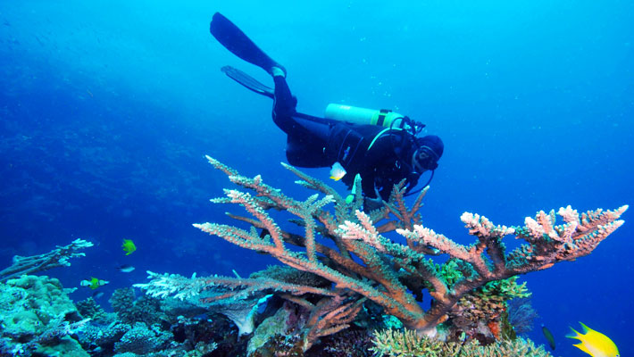 qamea fiji dive holiday